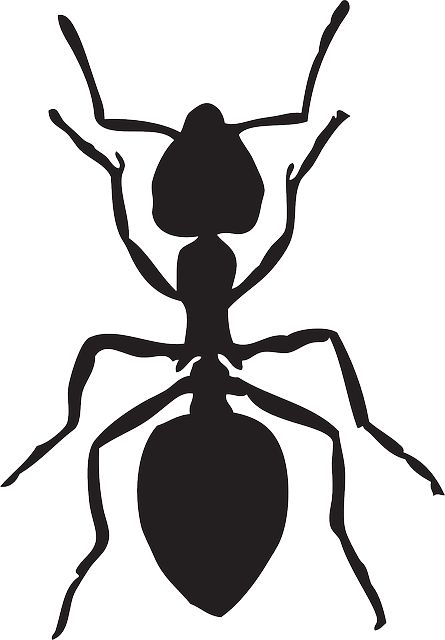 Free vector graphic: Ant, Insect, Animal - Free Image on Pixabay - 159283