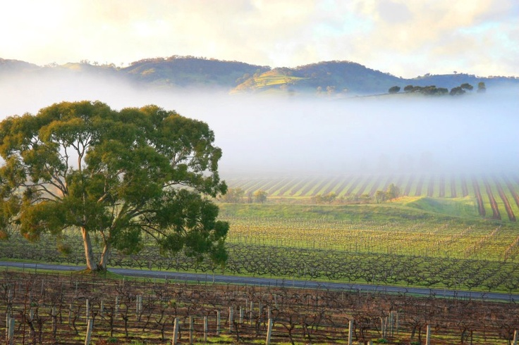 Barossa Valley mist via Adelaide Winery Tours.