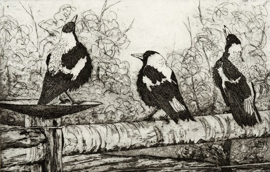 Chorus - Kevin Foley Etching and Aquatint 2012 $440.00 Available at www.cascadeprintroom.com.au