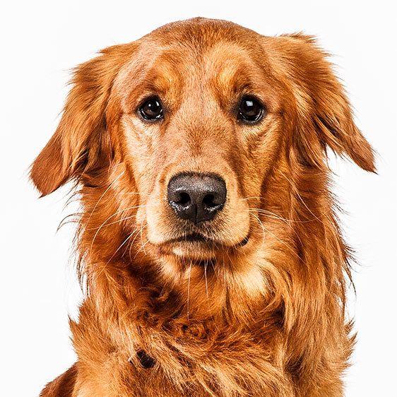 Barbara O'Brien Takes Precious Pooch Portraits   Dogster