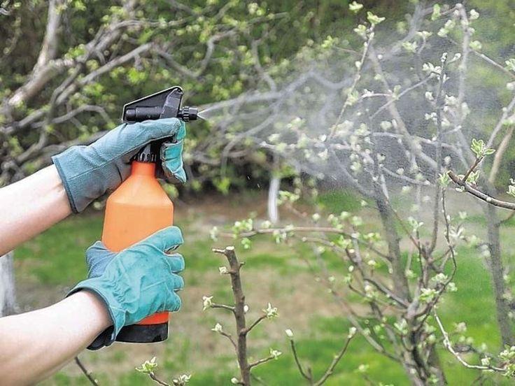 Как использовать железный купорос в садоводстве?
