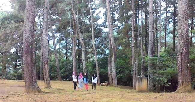 wisata hutan pinus bumi perkemahan kajar dawe kudus | info wisata terbaru