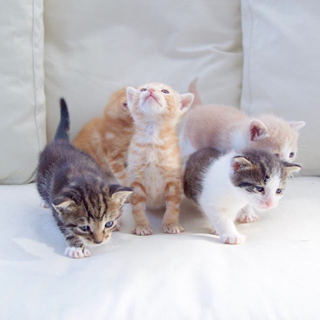 Kitten Season Is Here Cats Are Seasonal Breeders And Mate During