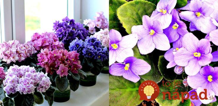 Kvety ako z kvetinárstva môžete mať po celé roky. A čo je najlepšie, nepotrebujete nič špeciálne!