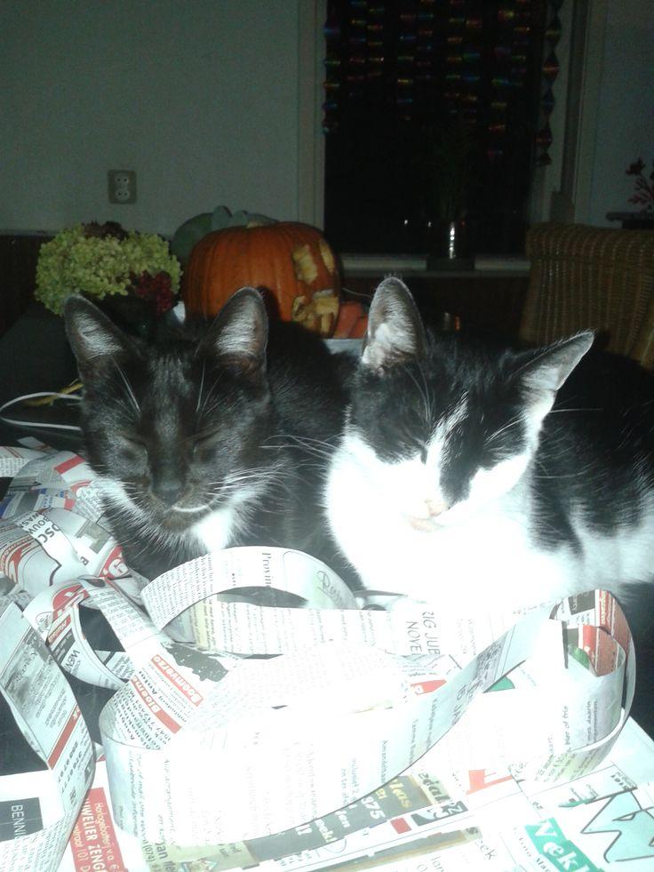 schilderij kunstroute van: Gerrie Nijendijk-Kers  deze afbeelding vind ik passen bij het schilderij omdat die kat mij doet denken aan mijn eigen katten# kit en kat