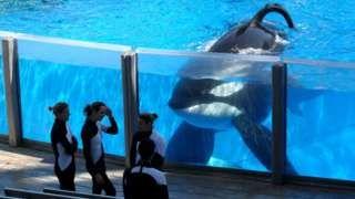 Tilikum the SeaWorld orca that killed a trainer dies