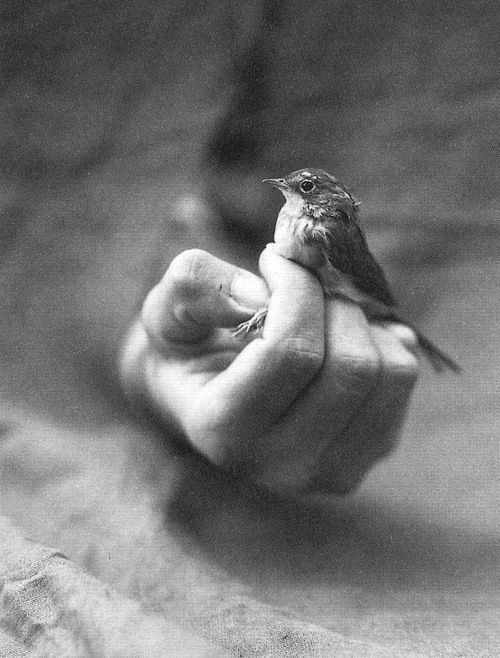 trusting ~ Matthew 6:26 Look at the birds of the air, for they neither sow nor reap nor gather into barns; yet your heavenly Father feeds them. Are you not of more value than they?