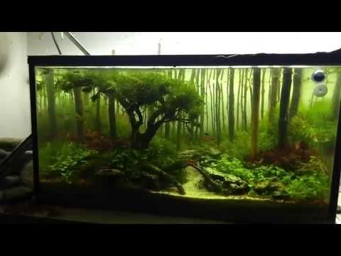 Aquascaping Forest