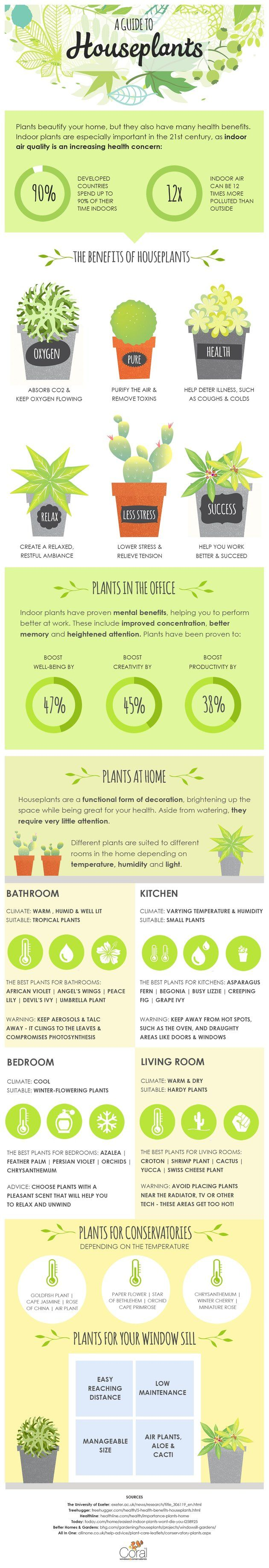 Infographic: A guide to house plants. From my house plants board