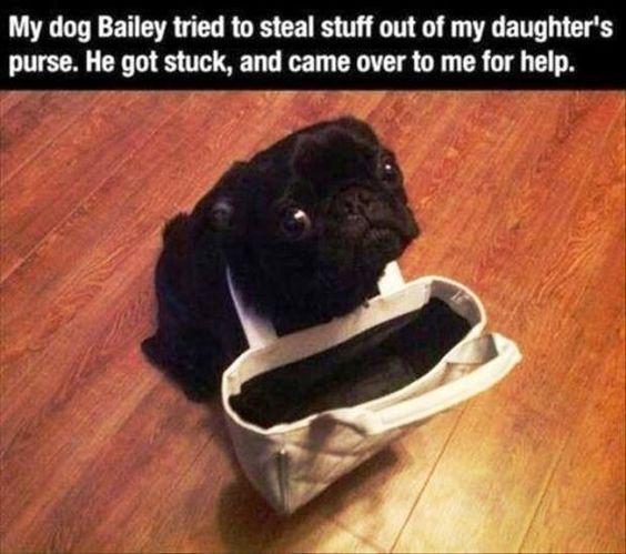 Dog Shaming #dogshaming