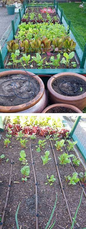 25 Best Ideas About Drip Irrigation On Pinterest Irrigation Home Irrigation Systems And