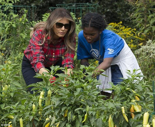Michelle Obama started he garden as part of her 'Let's Move!' campaign to fight childhood ...