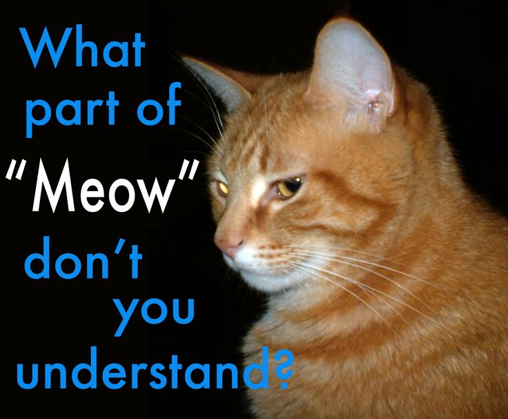 19 best images about meow on pinterest