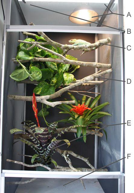 How To Set Up A Proper Chameleon Enclosure