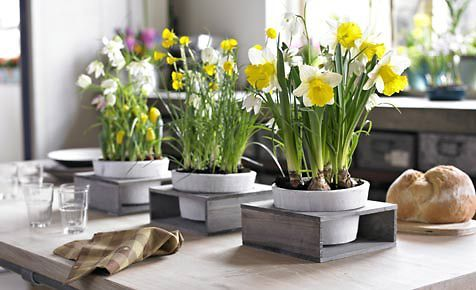 blumenzwiebeln pflanzen bastel ideen f r ostern. Black Bedroom Furniture Sets. Home Design Ideas