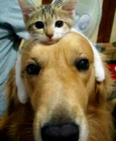 My love is blind: Dogs And Cat, Best Friends, Funny Pictures, So Cute, Bestfriends, Pet, Kittens, Headbands, Animal