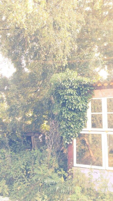 Fairy material, @ my backyard