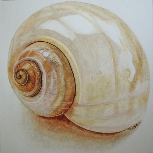 ракушки рисунки акварелью фотограф-продавец адлере