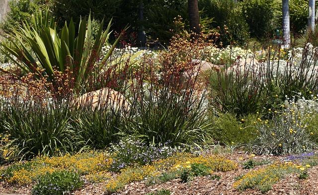 Australian Natives at Mt. Annan botanic gardens