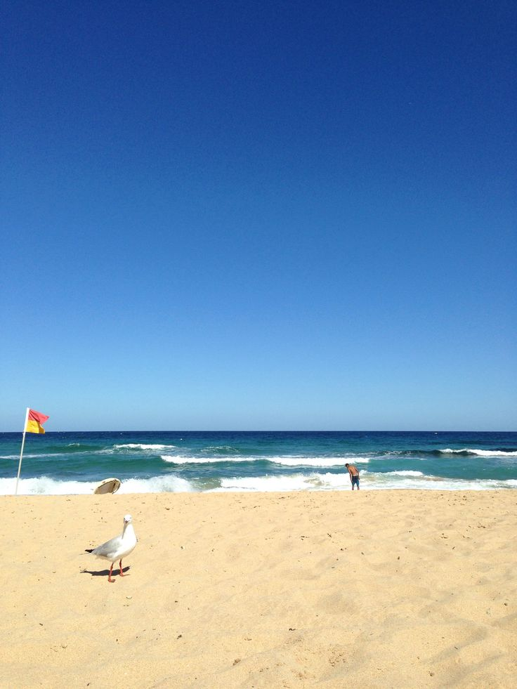 Any of the beaches north of Wollongong are well worth the trip! One of the best is Austinmer. Check out the fish n chips shop and eat on the beach. There are wave pools that are perfect for a hot summers day.