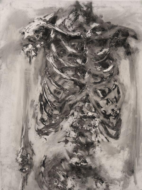 exploring the human skeleton focusing on the rib cage