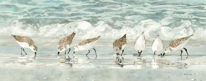 Sandpipers On the Beach Prints | Sandpipers on the Beach