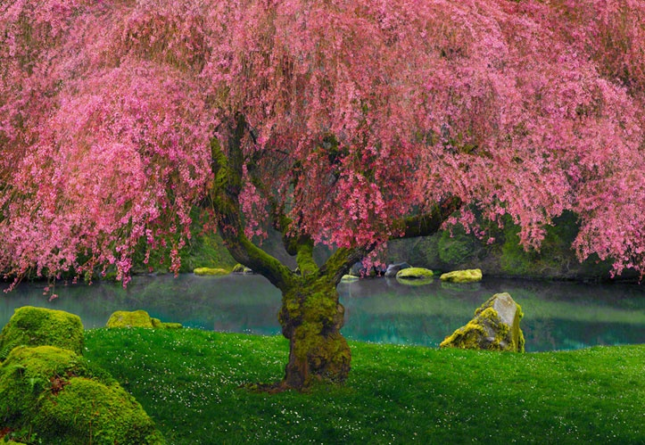 Tree of Dreams - by Peter Lik  So soft and deeply rooted...love the lighting and shape, too!