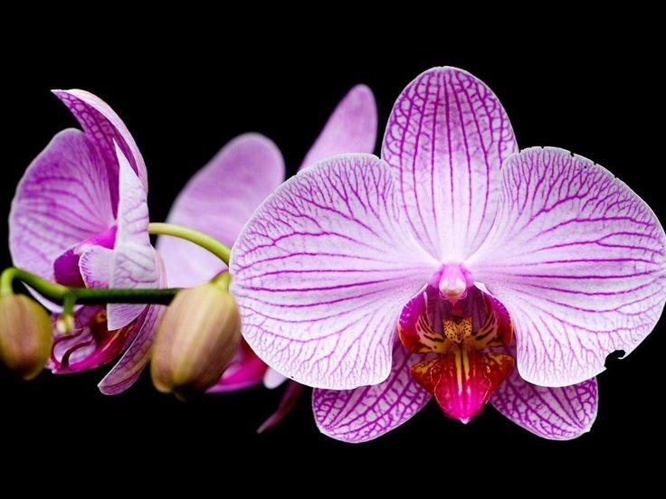 orquideas moradas wallpaper - Buscar con Google