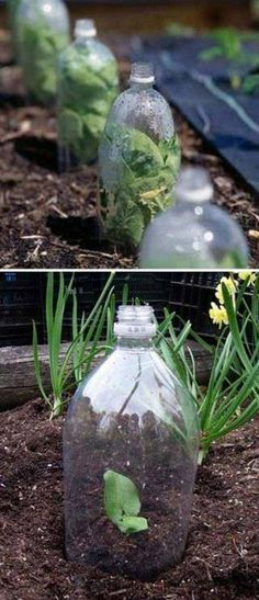 2-Liter soda bottles as most easy greenhouse - 17 Simple Budget-Friendly Plans to Build a Greenhouse