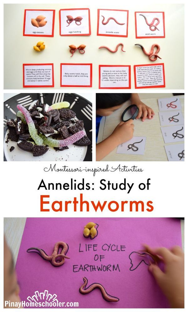 Earthworms as nature's free fertilizer