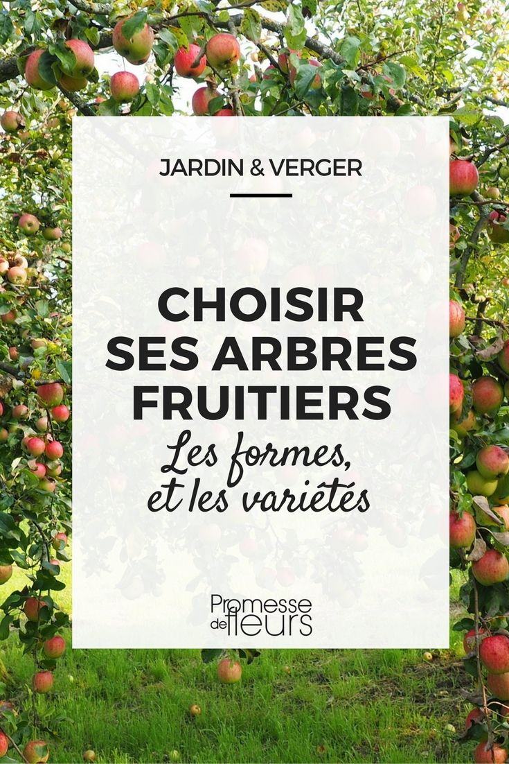 Les 25 meilleures id es de la cat gorie arbres fruitiers for Amenagement jardin fruitier