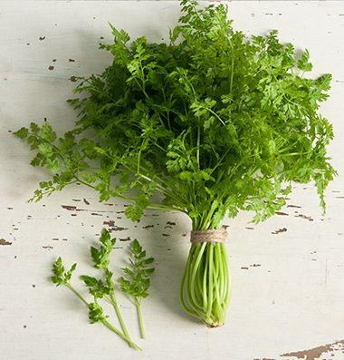54 best herbchervil images on Pinterest Herb seeds Herb garden