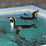 #fasting #primal Religious month affecting fish diet for penguins in Mumbai zoo reveals poor planning  Shraavana is the fifth month of the Hindu calendar which begins in late July and continues till the third week of August. For many Hindus, it is the month of fasting. Many people also avoid non-vegetarian food during Shraavana. In Mumbai, this year's ... http://www.firstpost.com/living/religious-month-affecting-fish-diet-for-penguins-in-mumbai-zoo-reveals-poor-planning-2947