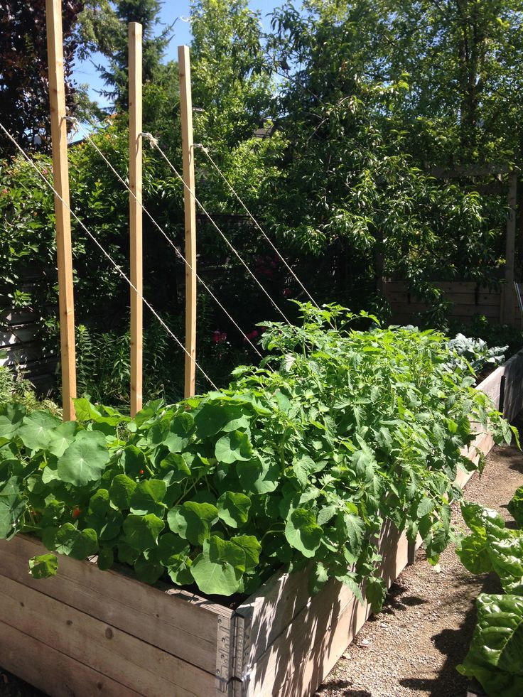 285 best images about edible garden ideas on pinterest for Edible garden ideas