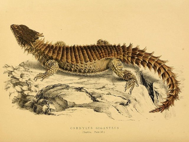 LOVE THIS. Illustrations of the zoology of South Africa. v.3. London :Smith, Elder and Co.,1838-1849.