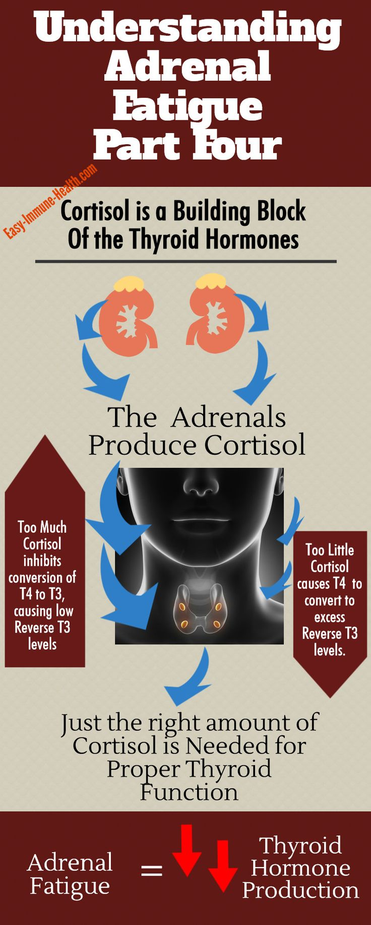 Understanding adrenal gland fatigue part IV.  Cortisol levels are incredibly important to your health and can affect your thyroid gland function.