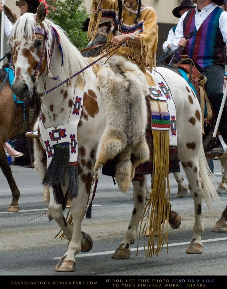 Native american indian Horse in Parade Regalia- Google Search