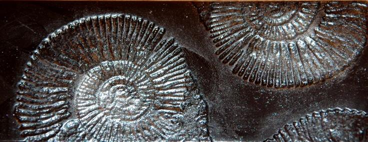 tablette fossile argent