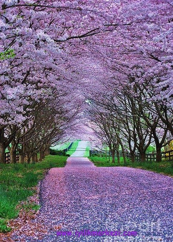 Günün Olumlaması: Baktığım insanlarda, olaylarda, deneyimlerde iyi olanı, hayırlı olanı görmeyi biliyorum. Sevgiyle, şevkatle, anlayışla bakıyorum. İyiyi, güzeli, potensiyeli görüyorum. Yolum açık, içim huzur dolu. Şükran içinde ilerliyorum ... — Iyilik'te. #iyilikmerkezi #iyi #güzel #sevgi #yol #aydınlik #bybegumkarace 17122015