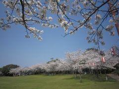 福岡県久留米市城島町で今年も第6回 城島町民の森公園桜まつりが行われます この時期城島町民の森では約200本の桜が咲いて人気の花見スポットになってるんです ステージで踊りや歌など多彩なイベントも開催されるから時間があったら行ってみてくださいね  tags[福岡県]