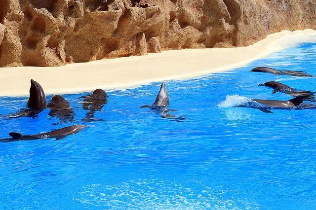 Sen z delfinami - wizualizacja