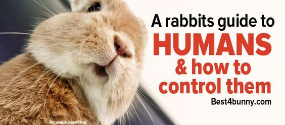A simple guide to help bunnies take control of their humans... http://best4bunny.com/rabbits-guide-humans-take-control/