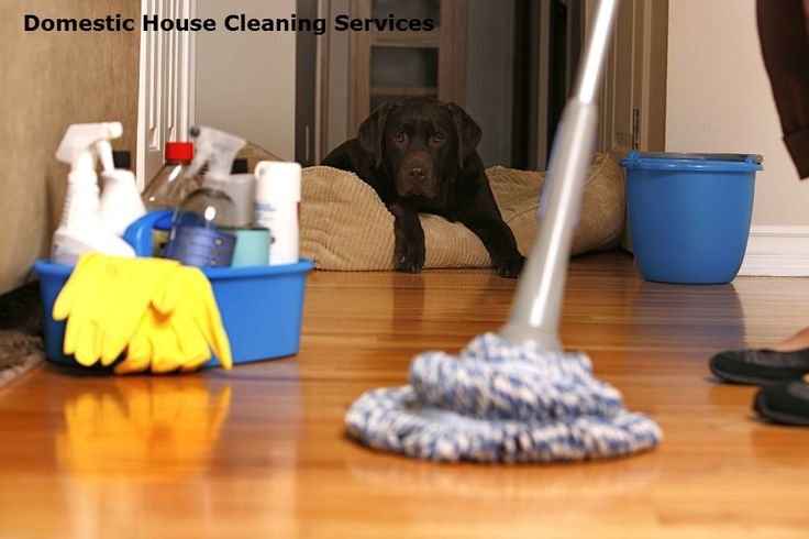 Precious Cleaning Services offer Domestic House Cleaning Services in Melbourne with not only orderly and hygienic work but also affordability. Precious Cleaning Services provides a range of Cleaning Services in Melbourne including Office Cleaning, Commercial Cleaning, School Cleaning, Corporate Cleaning, Supermarket Cleaning.