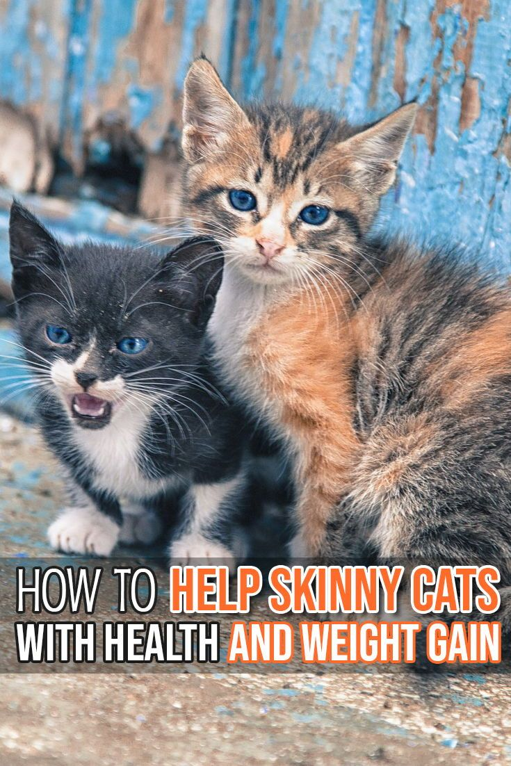 Felineliving Net Cat Care Cats Cat Health Problems