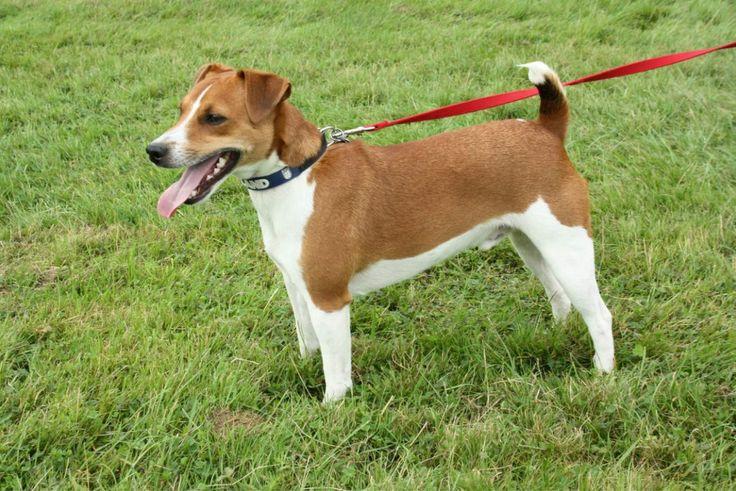Tina Holmes' dog Stan #PreciousPet of #April #PoM