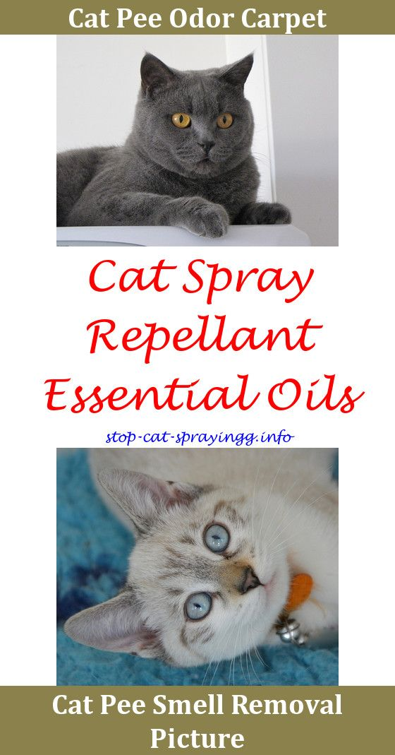 Spray For Cats Not To Best Product Get Cat Urine Smell Out Of Carpet Carpets Stop Spraying In House Clothes