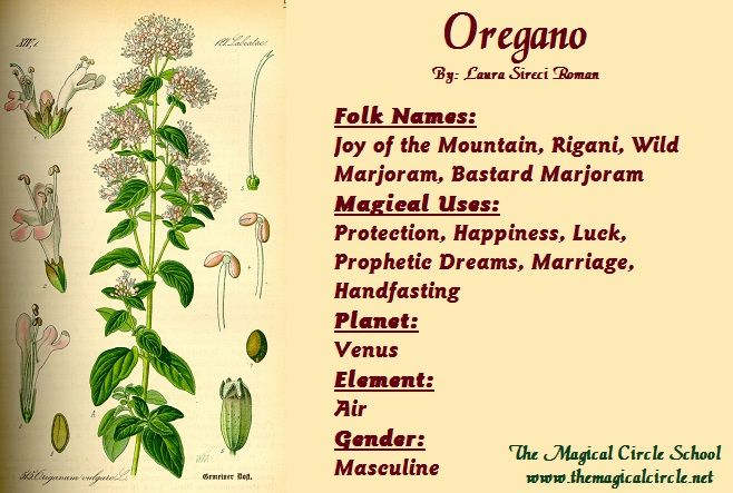 Oregano - By: Laura Sireci Roman