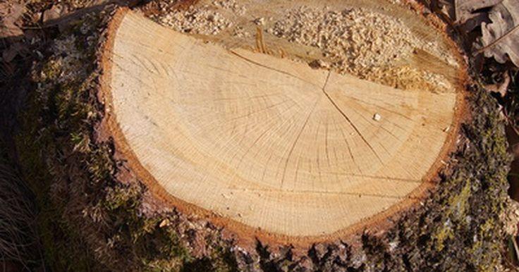 Como triturar tocos de árvores?. Cortar uma árvore e retirar a madeira é apenas uma pequena parte da tarefa de remoção de árvores de sua propriedade. Uma vez que a serra é posta de lado, você é deixado com o toco que, além de feio, atrapalha a lâmina de seu cortador cada vez que você corta a grama. Empresas de remoção de árvores e paisagistas cobram muito caro para remover um ...