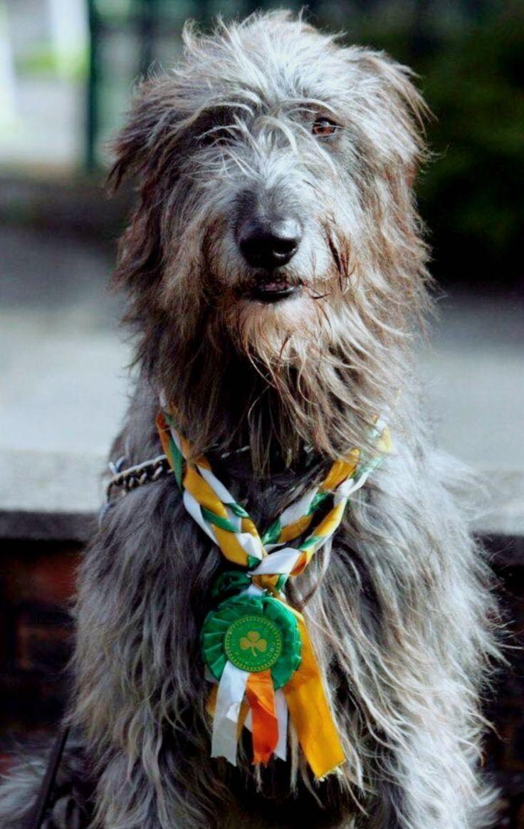 Ballyseede Castle Ireland, Irish Hound Irish wolfhound