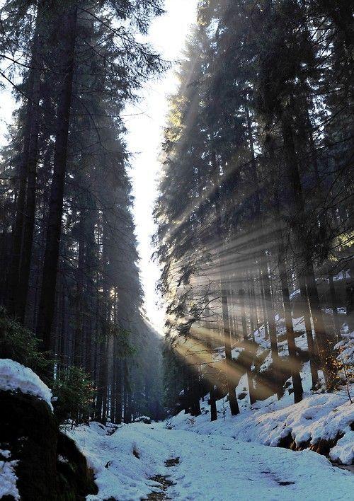Sun Rays, The Cascades, Washington photo via melanie